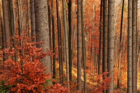 Beautiful autumn forest scenery during the daytime.