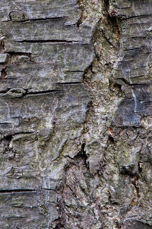 Detailed view of a tree bark usable as a background. photo