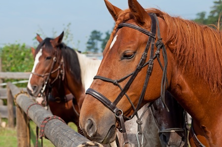 Beautiful horses, picture taken during the daytime. photo