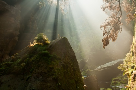 czech switzerland: Veduta di raggi di sole belle durante il sorgere del sole autunnale.