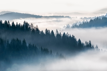 misty forest: Beautiful misty morning in a mountain valley. Stock Photo