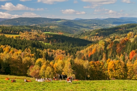 aerial animal: View of an autumn European countryside during the sunny day. Stock Photo