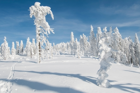 View of winter wonderland during the sunny day. Stock Photo - 16327019