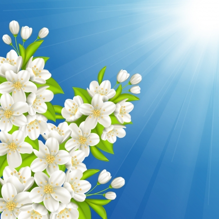 Vector illustration with blossoming cherry Vector
