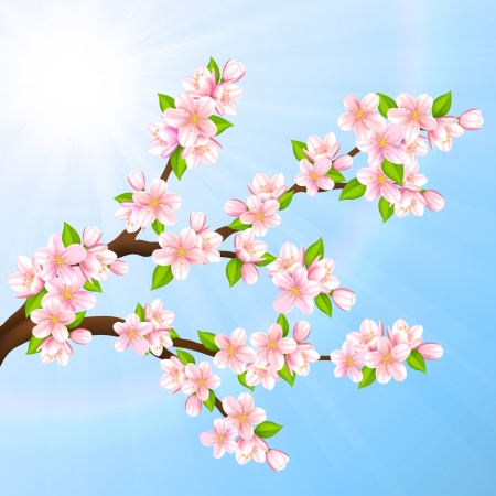 verdure: Vector illustration beautiful branches of Sakura on a blue sky