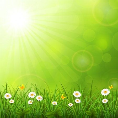 sol radiante: Ilustraci�n del vector del fondo de verano con la hierba