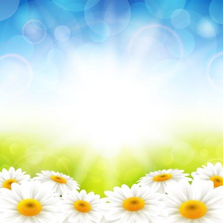 summer sky: Vector illustration flowers on the summer background