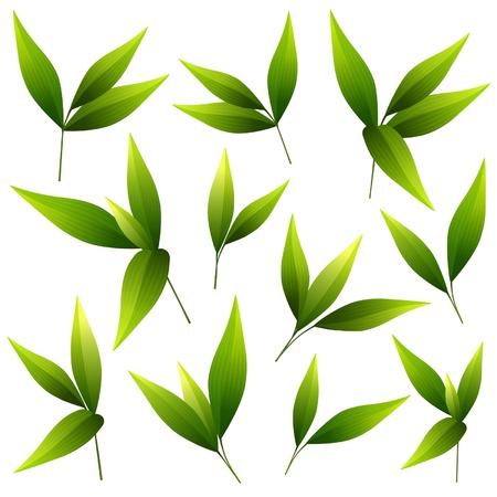 Ilustración vectorial de un conjunto de hermosas hojas verdes
