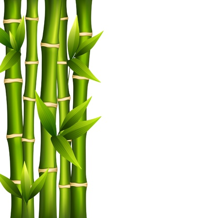bamboo plant: Vector illustration of bamboo on a white background