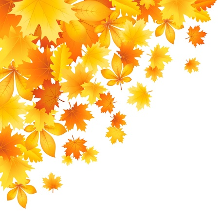 Vector illustration of a beautiful autumn leaves