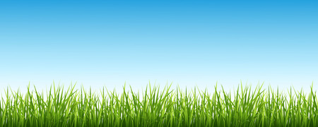 background sky: Vector illustration of a green grass against the sky