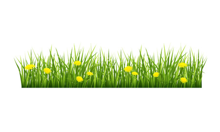 herbage: Vector illustration of green grass with yellow flowers on a white background Illustration