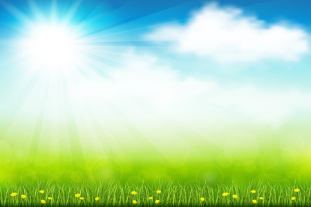 herbal background: Vector illustration green summer field with flowers and grass