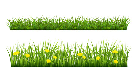 Vector illustration borders of grass on a white background Illustration