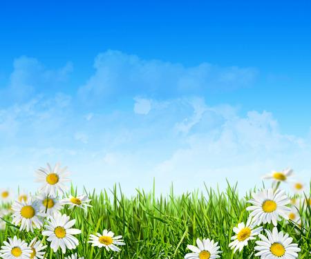 flowering field: Spring green field with flowers
