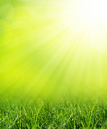 夏の草原と緑の草