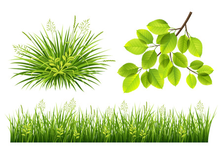 Vector collection of green grass and leaves for design Illustration