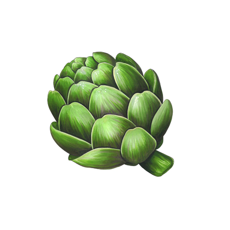 Artichoke on a white background. Sketch done in alcohol markers. You can use for greeting cards, posters and design projects