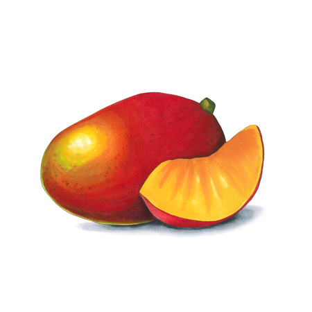 Mango on a white background. Sketch done in alcohol markets. You can use for greeting cards, posters and design projects