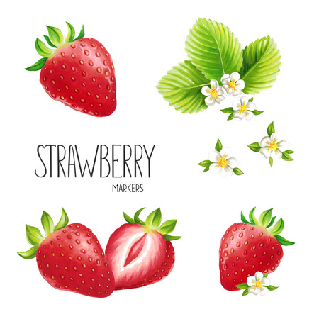 Strawberry on white background. Sketch done in alcohol markers. You can use for greeting cards, posters and design projects