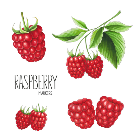 Raspberry on white background. Sketch done in alcohol markers. You can use for greeting cards, posters and design projects Stock Photo