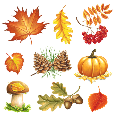 Autumn items painted markers on white background. You can use for greeting cards, posters and design projects Stock Photo
