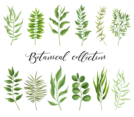 Botanical collection painted markers on white background. You can use for greeting cards, posters and design project
