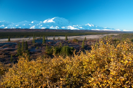 denali: Mt  McKinley  Denali  with yellow bush in autumn