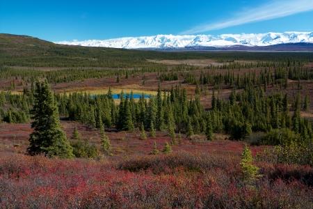 denali: Tundra landscape in Denali National Park near Wonder Lake campsite