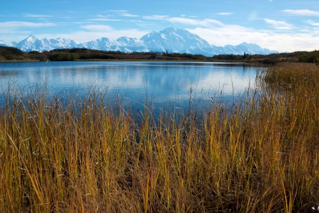 Mt  McKinley taken from Reflection pond with yellow grass photo