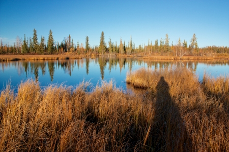 Lake near Fairbanks with dry high yellow grass and trees reflecting in water in autumn  Photographer photo
