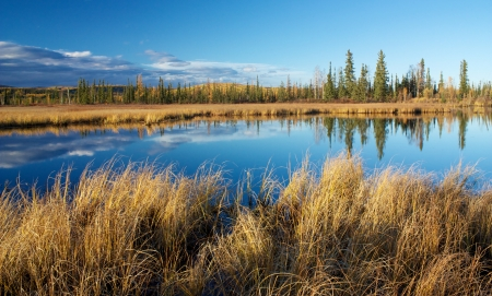 Lake near Fairbanks with dry high yellow grass and trees reflecting in water in autumn photo