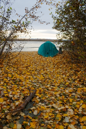 Green tent on the shore of Talkeetna river with lots of yellow fallen leaves photo