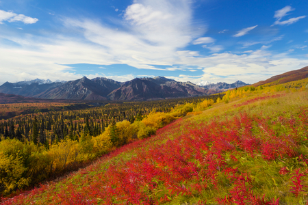 glenn: Beautiful view of high mountains near Matanuska glacier in fall with red flowers Stock Photo