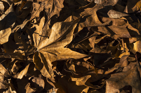 expanse: expanse of dry leaves Stock Photo