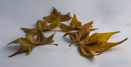 dry leaves arranged for Christmas tree photo