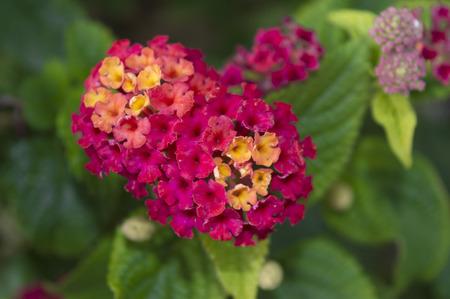Flor colorida rodeada por las hojas Foto de archivo - 34734018