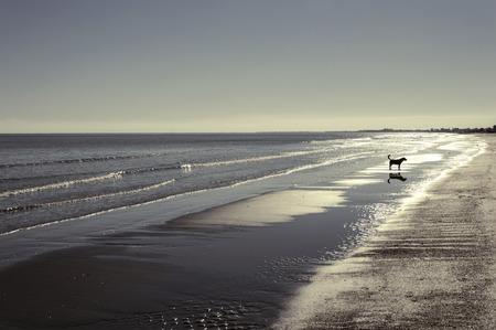 shadow silhouette: shadow on the beach