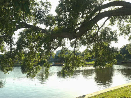 Lazy trees by the water Tampa Florida Stock Photo