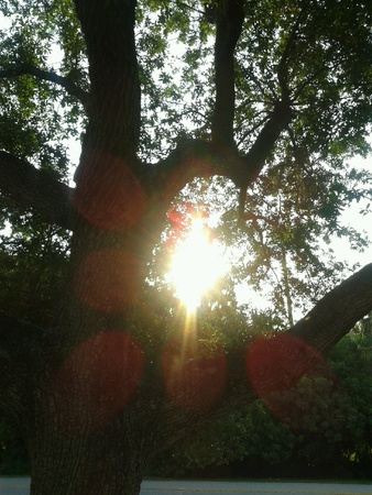 Sun beams shine through trees in Tampa Florida.