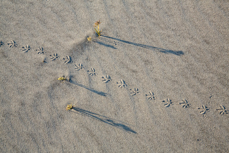 Abstract footprints from bird in sand makes an abstract image
