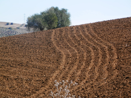 ploughed: Ploughed Field