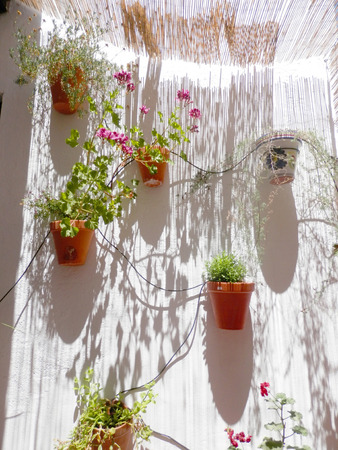 wall mounted: Sun streaking through reed roof onto wall mounted flowerpots