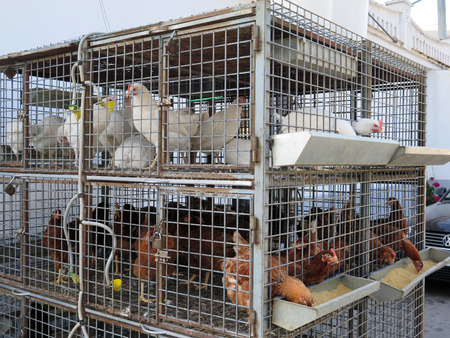 caged: Caged chickens for sale at local agricultural store