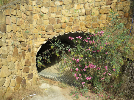 rainwater: Flowers and shrubs growing at entrance to rainwater culvert in Alora countryside, Andalucia