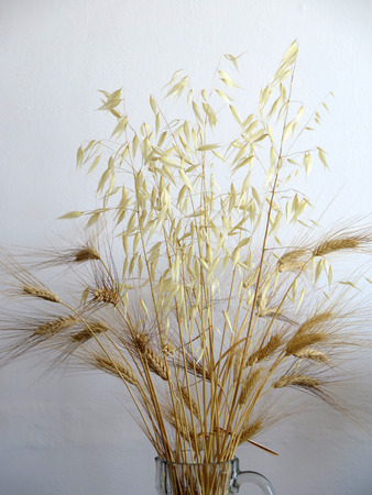 wild oats: Bunch of dried wheat and wild oats in vase Stock Photo