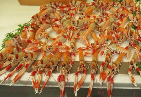 norvegicus: Nephrops norvegicus or cigalas on display at Malaga Atarazana market