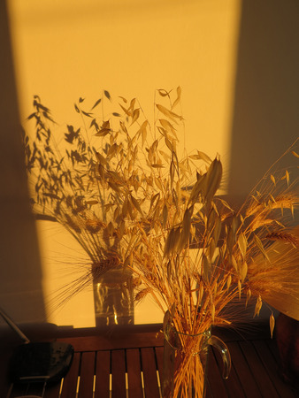 wild oats: Bunch of dried wheat and wild oats in vase casting shadow on wall Stock Photo