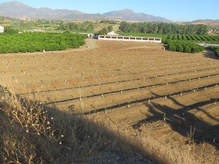 planted: Newly planted Orange grove near Pizzara, Andalucia