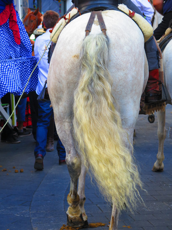 frizzy: Frizzy horses tail at local fiesta, Alora Andalucia Stock Photo